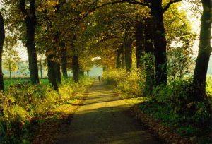 Feldweg im Herbst (Foto: Jürgen Zimmern 1999)